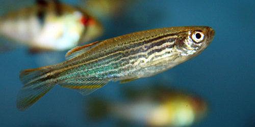 cá nhỏ cho hồ thủy sinh