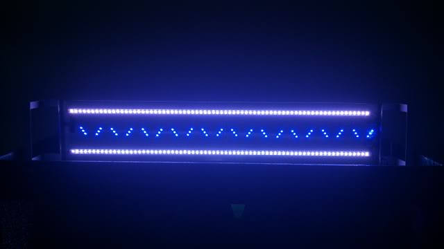máng đèn led 5630 trắng xanh