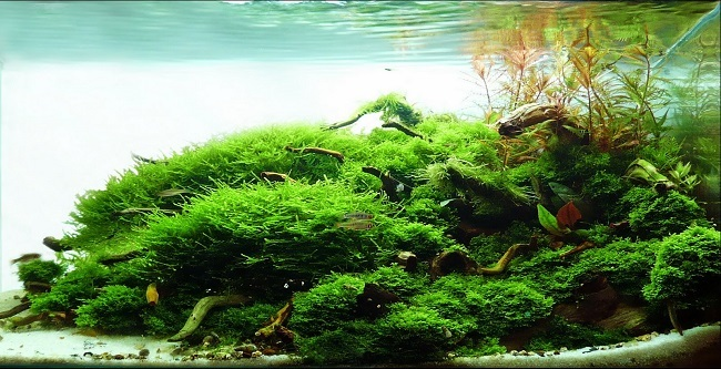 bể thủy sinh chơi rêu đẹp