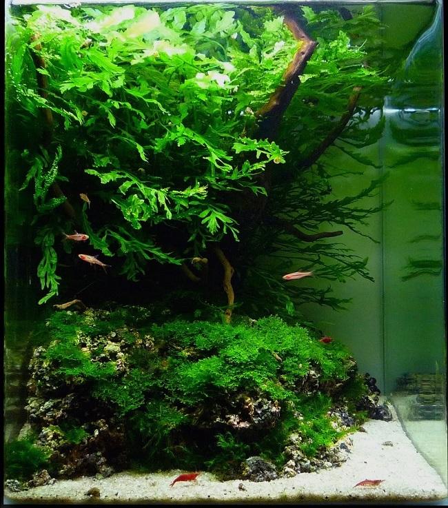 hồ rêu và dương xỉ nhỏ để bàn