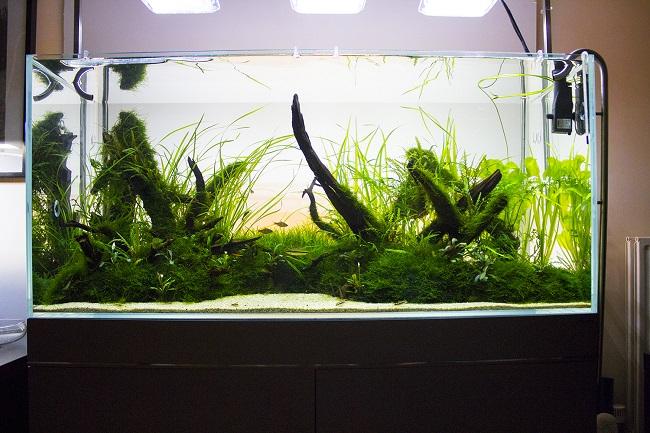 bể thủy sinh đang phát triển