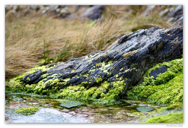 combination of moss and stones in aquatic layout