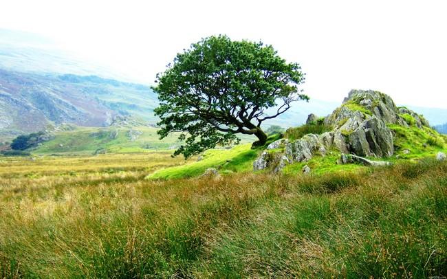 cây và tảng đá giữa đồng cỏ