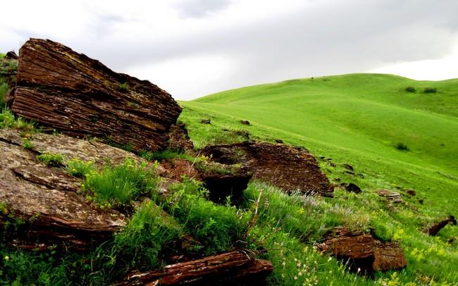 đá sẫm màu trên đồng cỏ xanh