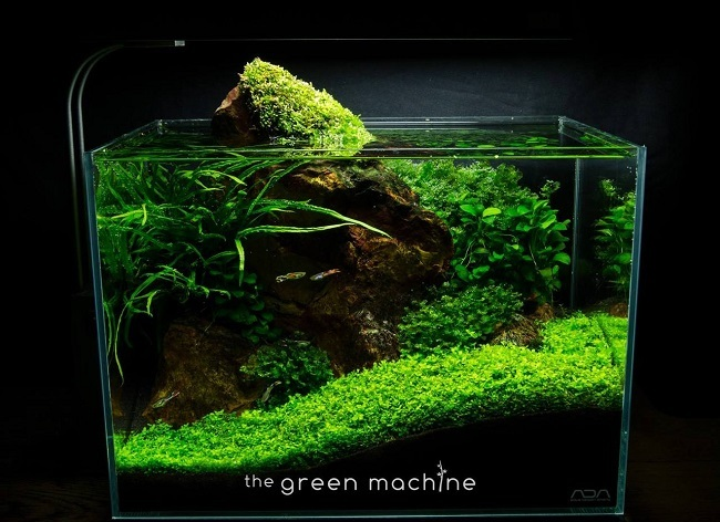 red-rock-green-machine-mini-tank