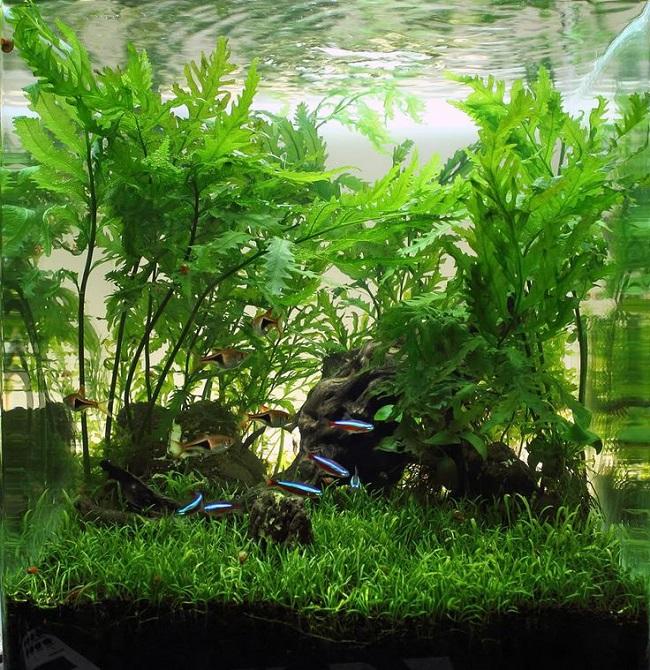 ý tưởng phối cây thủy sinh