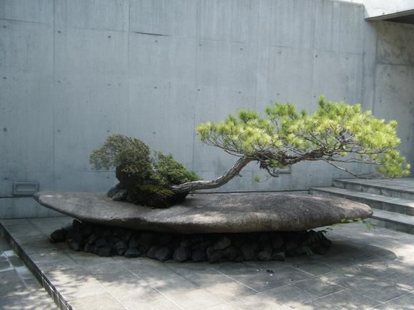 Không chỉ thủy sinh, còn cả bonsai nữa