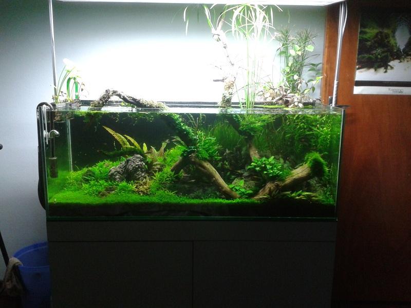 hồ thủy sinh 4 tháng tuổi