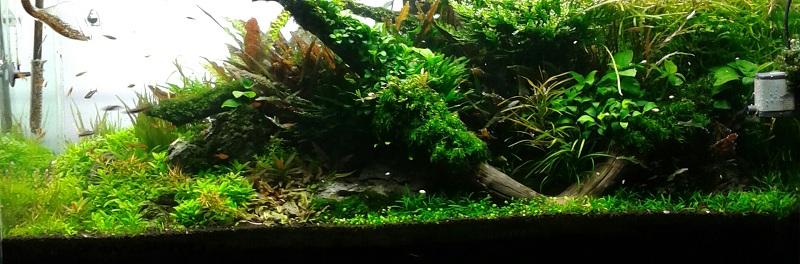 hồ thủy sinh cây rậm rạp