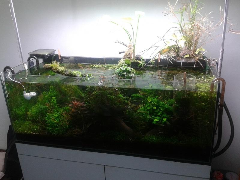 hồ thủy sinh phát triển tự do