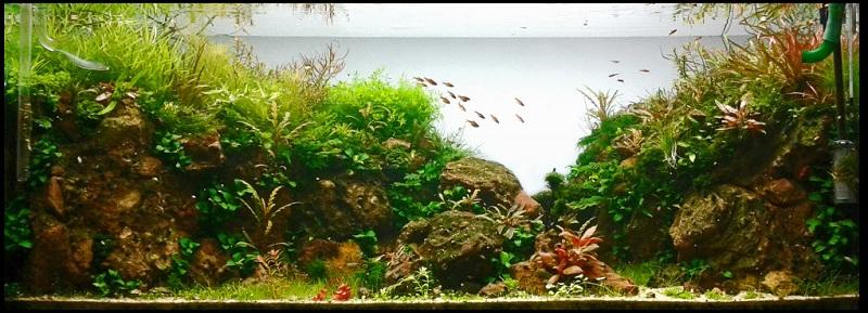 hồ thủy sinh tháng 8