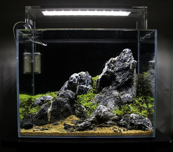 trồng trân châu cuba bể thủy sinh nano