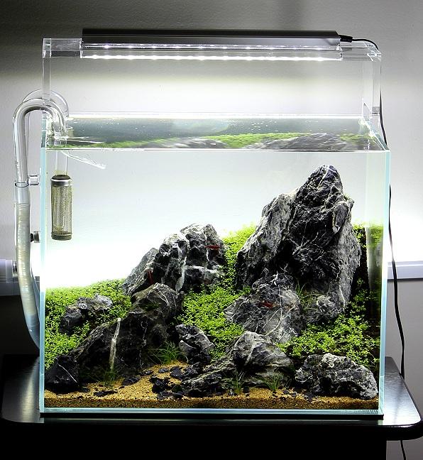 mô phỏng cảnh bình minh bể thủy sinh nano