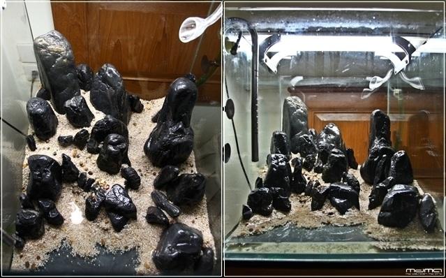 bố cục đá hồ thủy sinh để bàn
