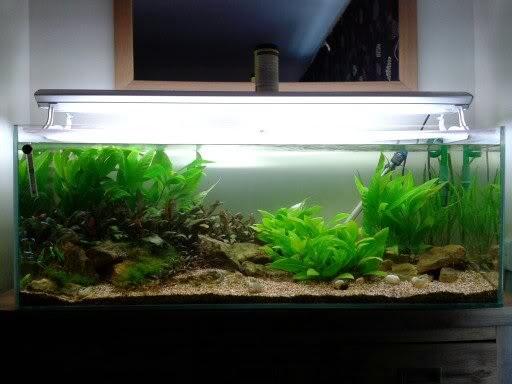 cập nhật hình ảnh một hồ thủy sinh đơn giản