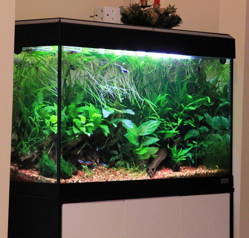 hồ thủy sinh đơn giản trong nhà
