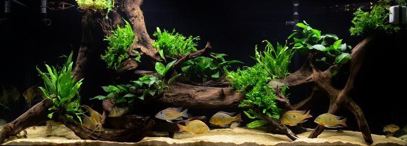 kết hợp màu sắc sáng tối bể thủy sinh