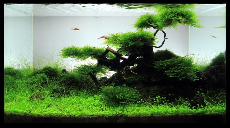 hồ thủy sinh rêu thanh thoát
