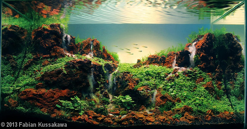 bể thủy sinh màu sắc tương phản