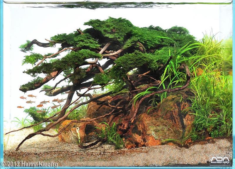 bố cục bể thủy sinh cây cổ thụ