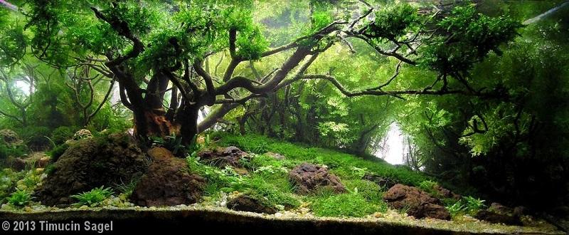 bể thủy sinh bố cục rừng có chiều sâu