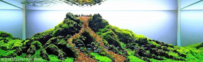 bể thủy sinh thể hiện hình ảnh núi lửa
