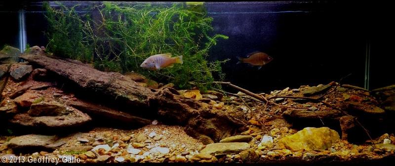 bể thủy sinh giải nhất thể loại biotop aga 2013