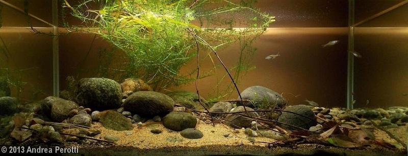 bể thủy sinh thể loại biotop từ đá cuội
