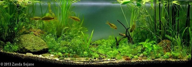 bể thủy sinh biotop tươi tốt, nhiều cây
