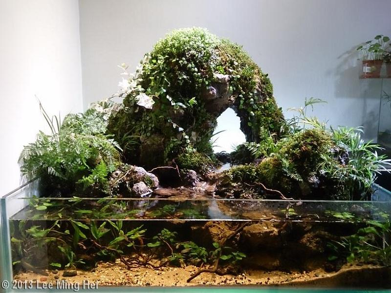 bể thủy sinh paludarium đơn giản