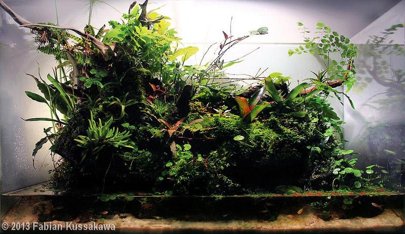 bể thủy sinh paludarium công phu