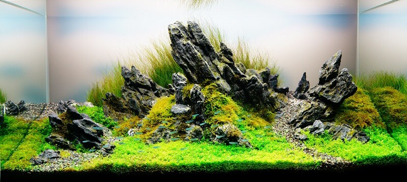 bể thủy sinh phong cách đá hoang dại