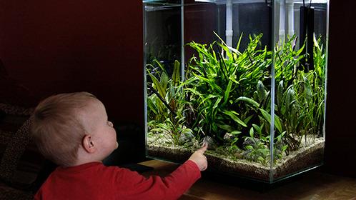 trẻ nhỏ bên bể thủy sinh