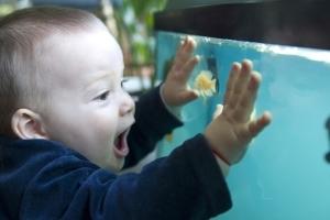 đảm bảo an toàn cho trẻ chơi bể thủy sinh