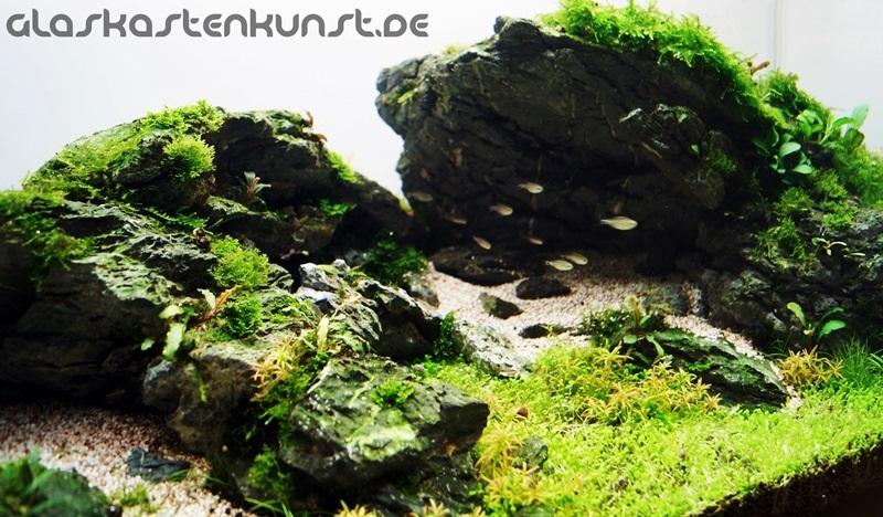 đá thủy sinh đẹp