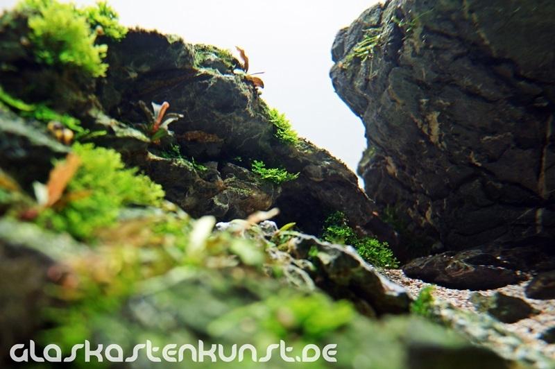 khe đá trong bể thủy sinh