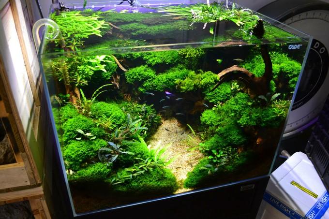 bể thủy sinh rừng