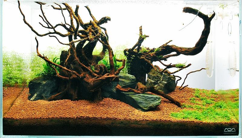 bể thủy sinh thiếu cây thủy sinh