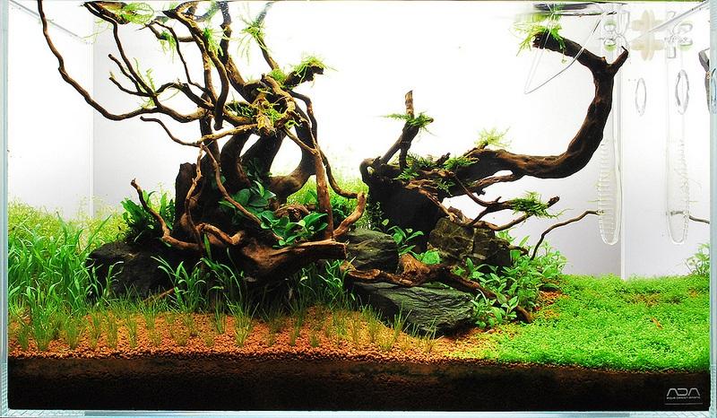 bổ sung cây thủy sinh vào bể thủy sinh