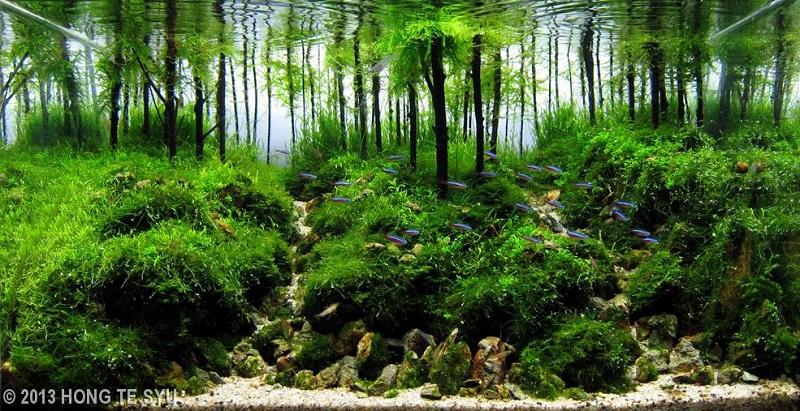 chi tiết lộn xộn và xơ xác trong bể thủy sinh bố cục rừng