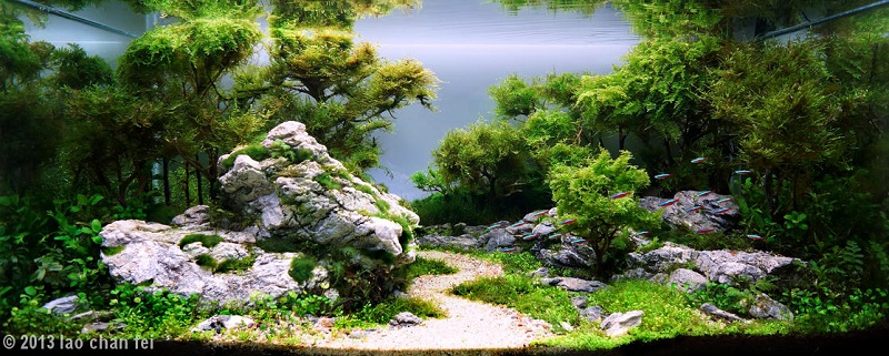 cây cao thấp không đều trong bể thủy sinh bố cục rừng