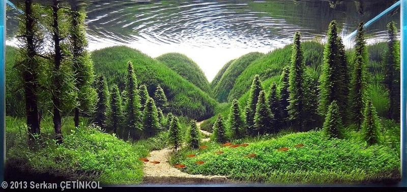 Hồ thủy sinh bố cục rừng với quy luật xa gần rõ nét