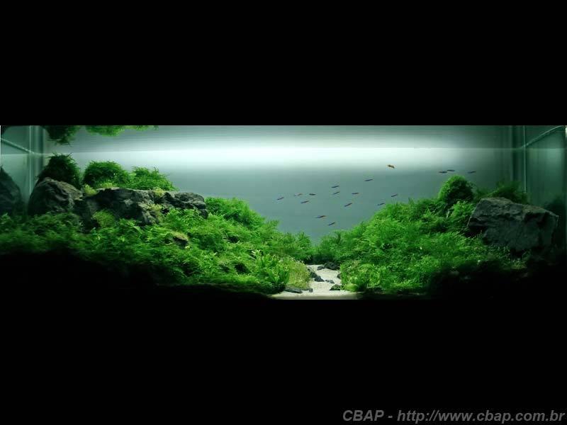 Hồ #017 - 118x37x43 cm (187L)