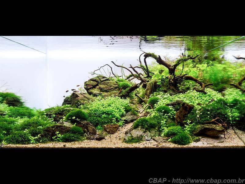 Hồ #035 - 120x125x60 cm (900L)