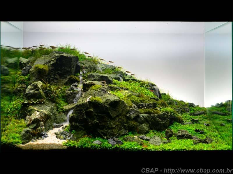 Hồ #051 - 60x40x40 cm (96L)