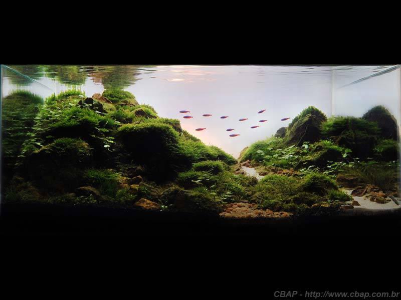 Hồ #002 - 50x40x28 cm (56L)