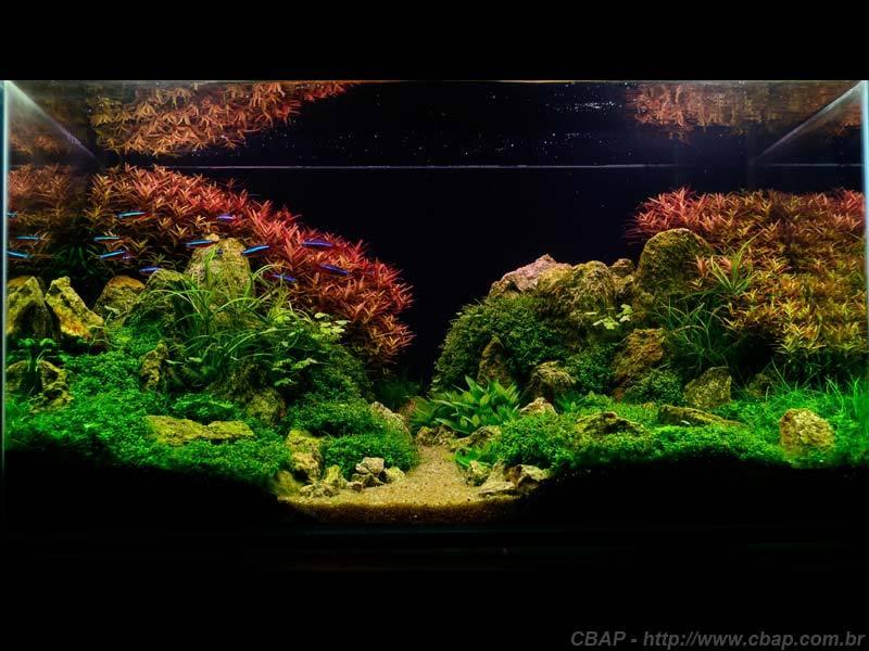 Hồ #004 - 55x36x30 cm (59L)