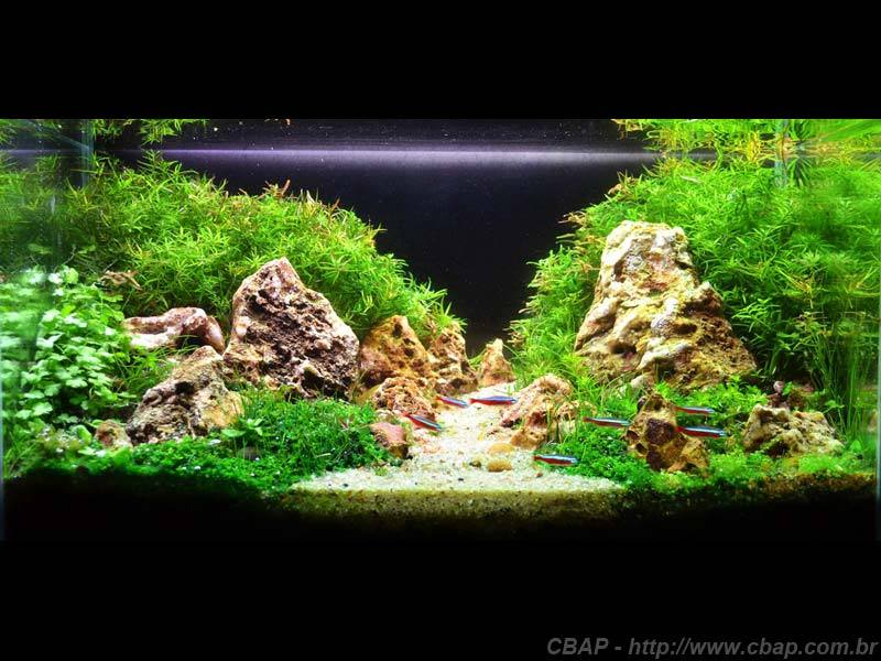 Hồ #008 - 45x26x27 cm (31L)