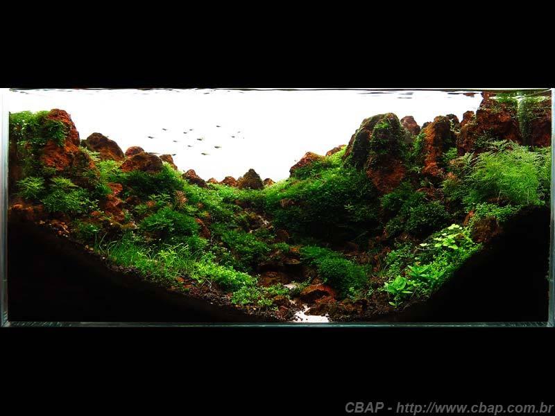 Hồ #018 - 60x30x30 cm (54L)