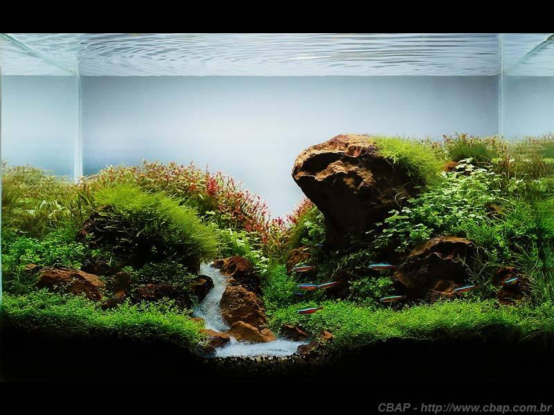 Hồ #042 - 45x35x32 cm (50L)